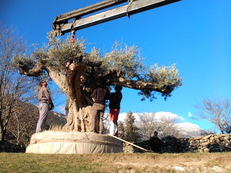 arboricultura1