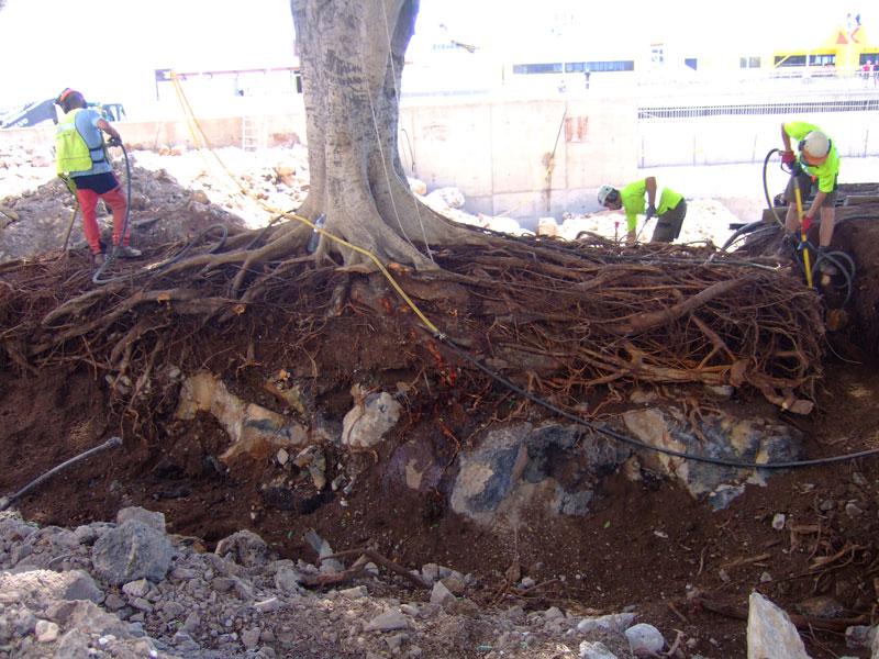 arboricultura2