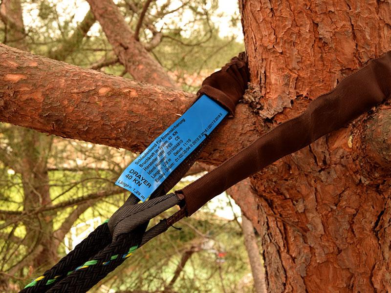 arboricultura3