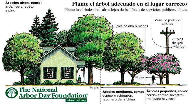 lugar-correcto-plantar-arbol
